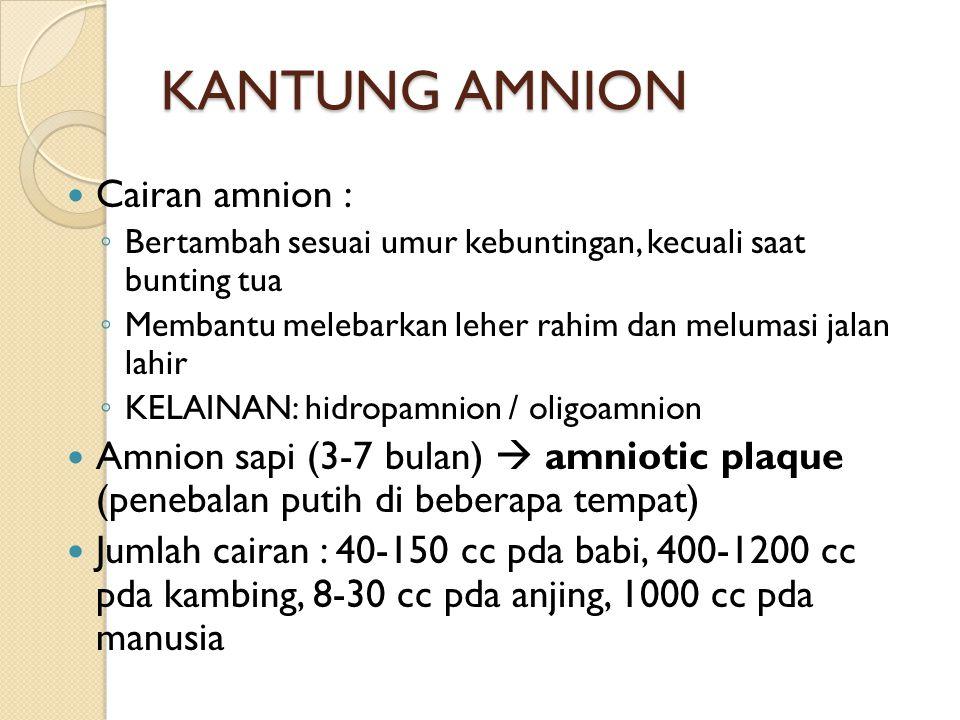 KANTUNG AMNION Cairan amnion : ◦ Bertambah sesuai umur kebuntingan, kecuali saat bunting tua ◦ Membantu melebarkan leher rahim dan melumasi jalan lahi