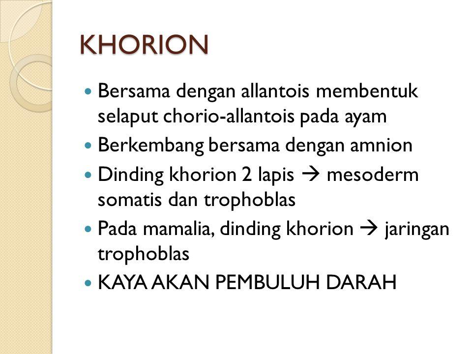 KHORION Bersama dengan allantois membentuk selaput chorio-allantois pada ayam Berkembang bersama dengan amnion Dinding khorion 2 lapis  mesoderm soma