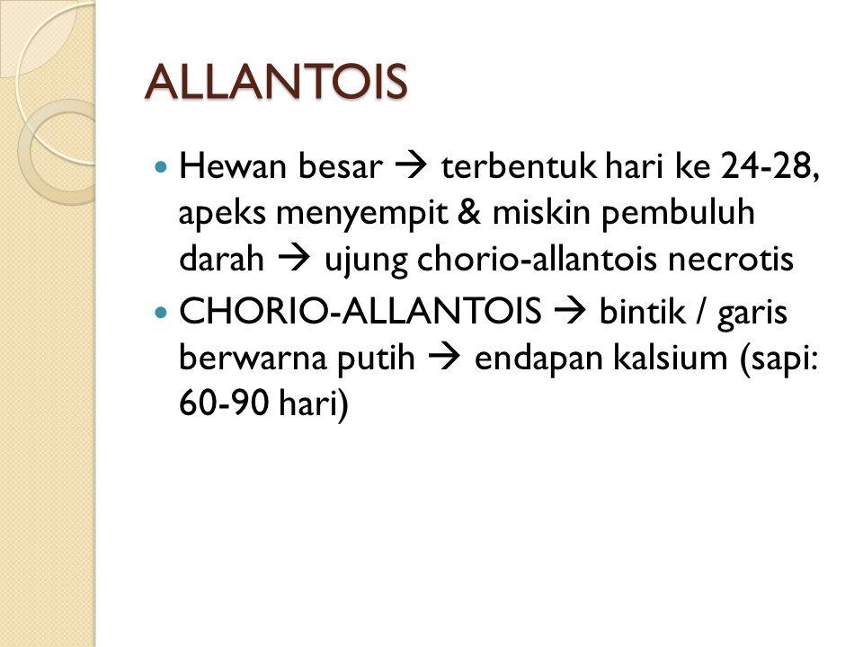 ALLANTOIS Hewan besar  terbentuk hari ke 24-28, apeks menyempit & miskin pembuluh darah  ujung chorio-allantois necrotis CHORIO-ALLANTOIS  bintik /