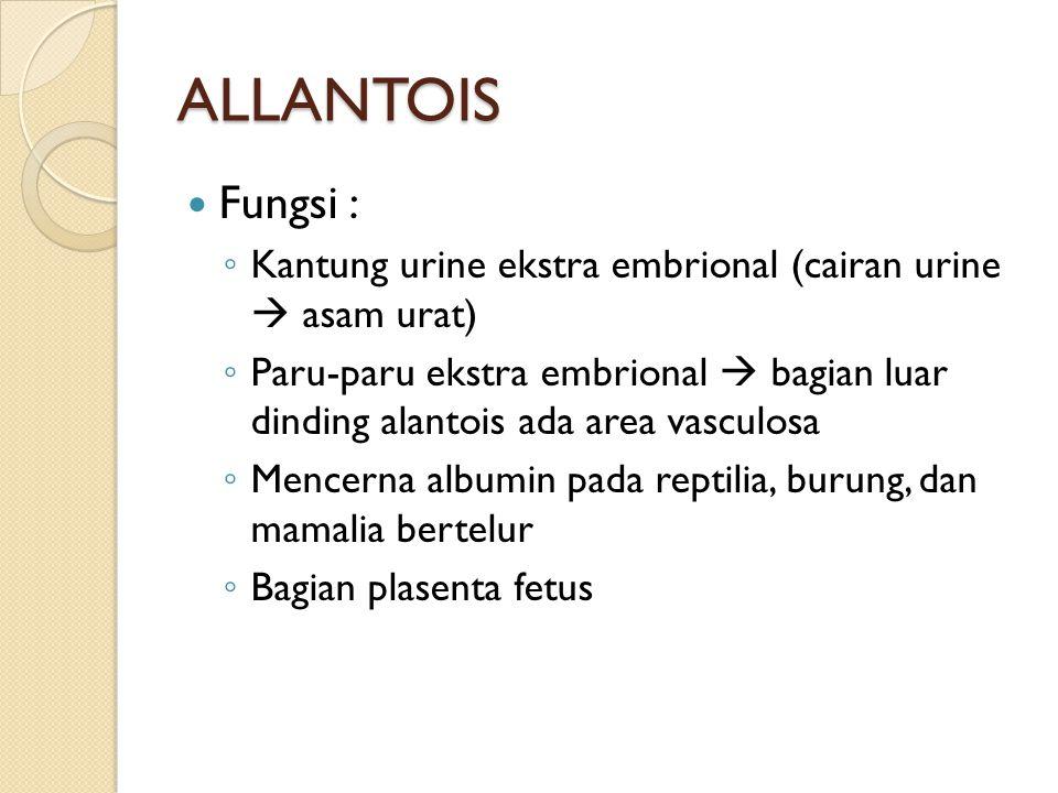 ALLANTOIS Fungsi : ◦ Kantung urine ekstra embrional (cairan urine  asam urat) ◦ Paru-paru ekstra embrional  bagian luar dinding alantois ada area va