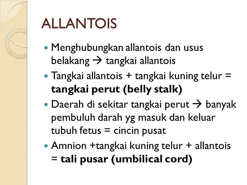 ALLANTOIS Menghubungkan allantois dan usus belakang  tangkai allantois Tangkai allantois + tangkai kuning telur = tangkai perut (belly stalk) Daerah