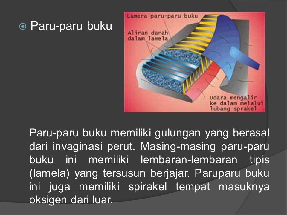  Paru-paru buku Paru-paru buku memiliki gulungan yang berasal dari invaginasi perut. Masing-masing paru-paru buku ini memiliki lembaran-lembaran tipi