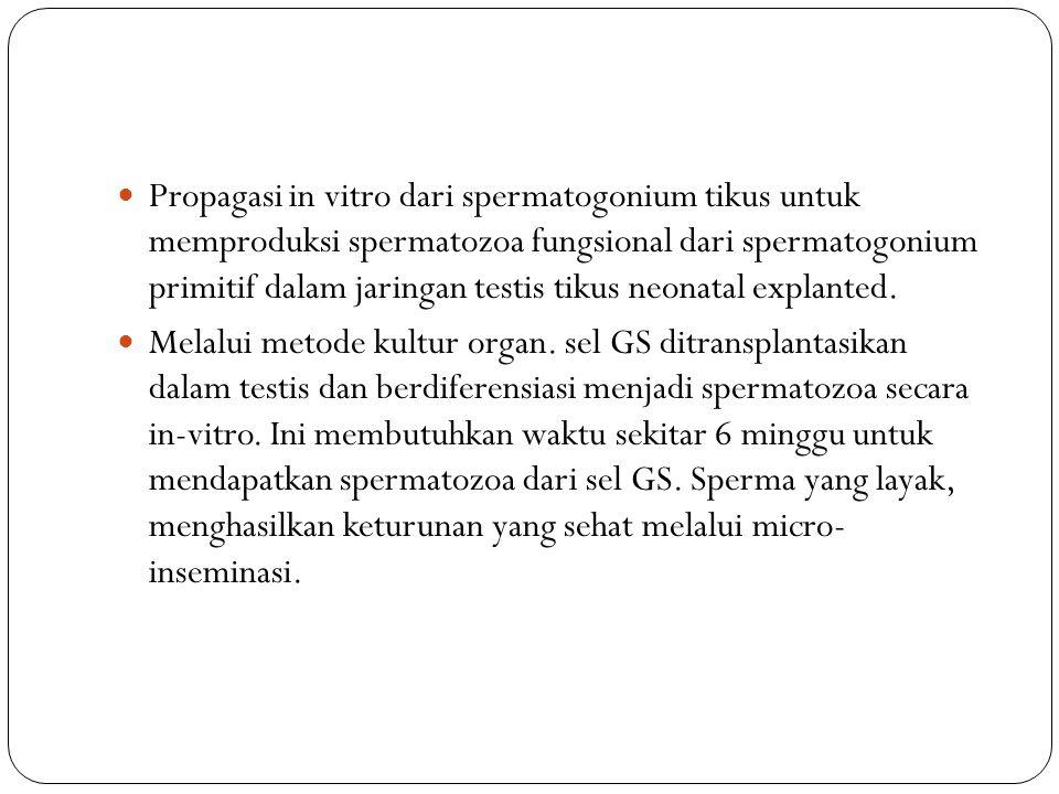 Propagasi in vitro dari spermatogonium tikus untuk memproduksi spermatozoa fungsional dari spermatogonium primitif dalam jaringan testis tikus neonata