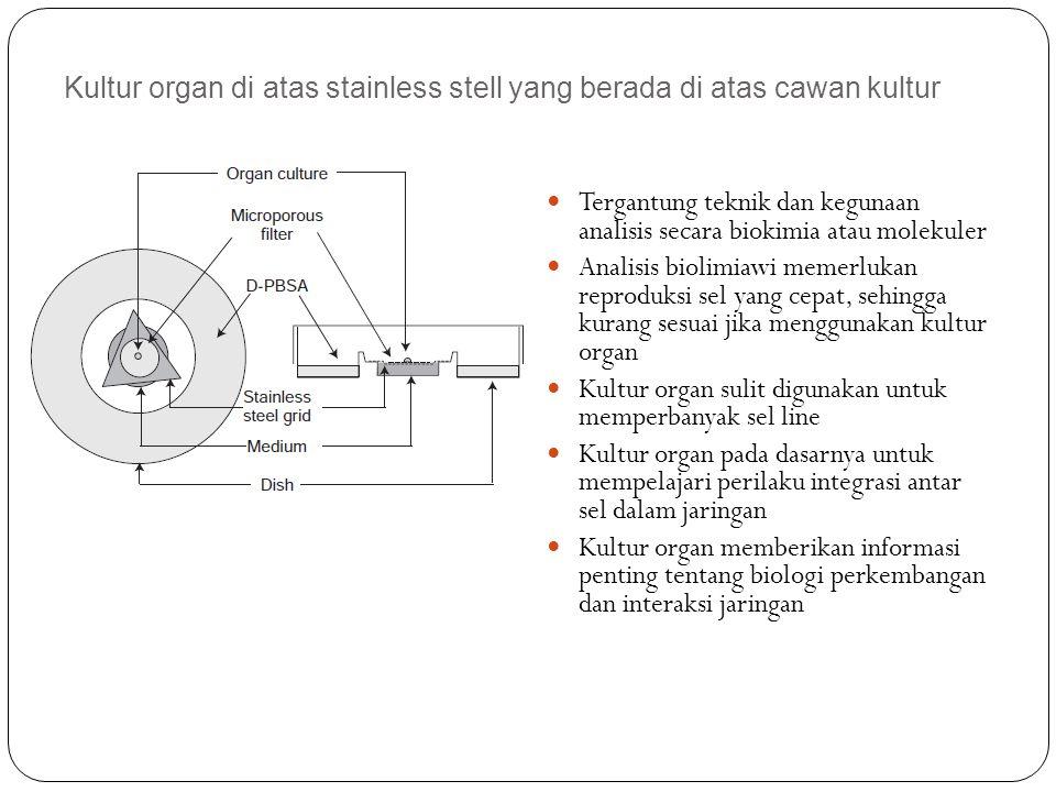 Kultur organ di atas stainless stell yang berada di atas cawan kultur Tergantung teknik dan kegunaan analisis secara biokimia atau molekuler Analisis