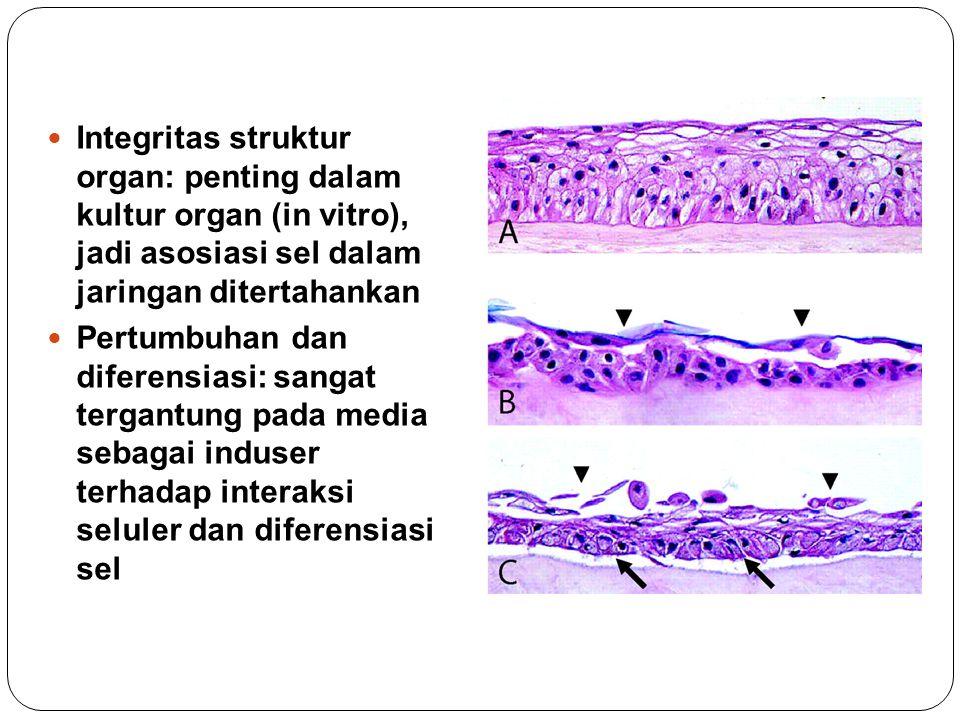 Integritas struktur organ: penting dalam kultur organ (in vitro), jadi asosiasi sel dalam jaringan ditertahankan Pertumbuhan dan diferensiasi: sangat tergantung pada media sebagai induser terhadap interaksi seluler dan diferensiasi sel