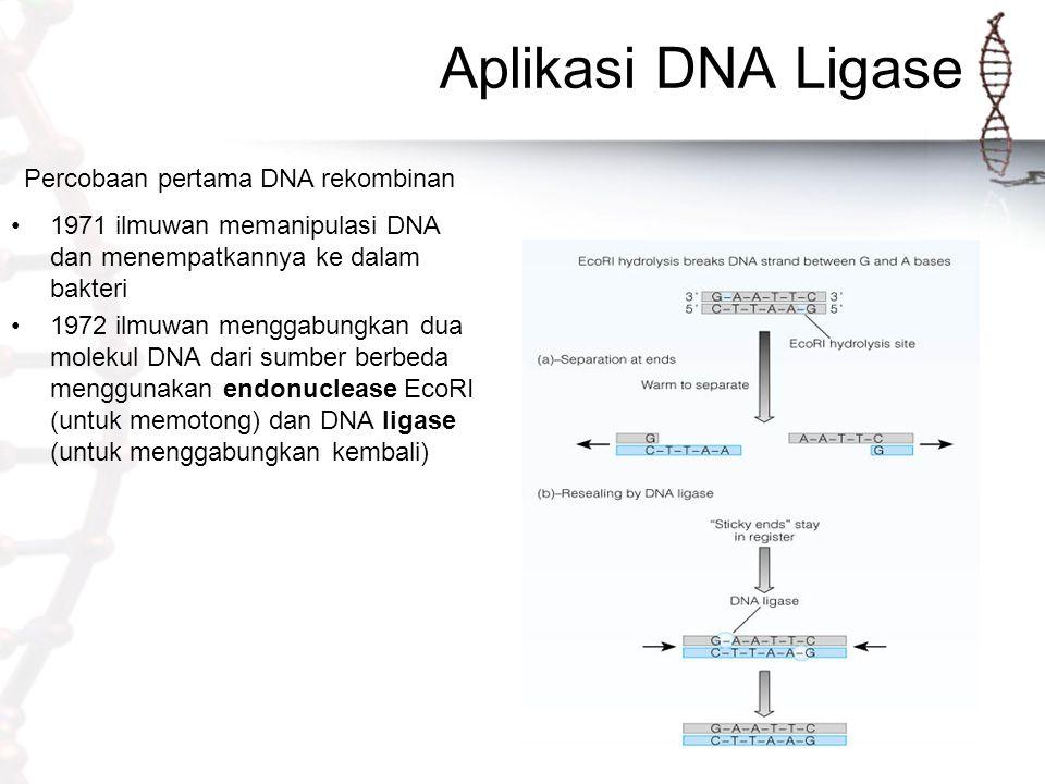 Aplikasi DNA Ligase Percobaan pertama DNA rekombinan 1971 ilmuwan memanipulasi DNA dan menempatkannya ke dalam bakteri 1972 ilmuwan menggabungkan dua molekul DNA dari sumber berbeda menggunakan endonuclease EcoRI (untuk memotong) dan DNA ligase (untuk menggabungkan kembali)