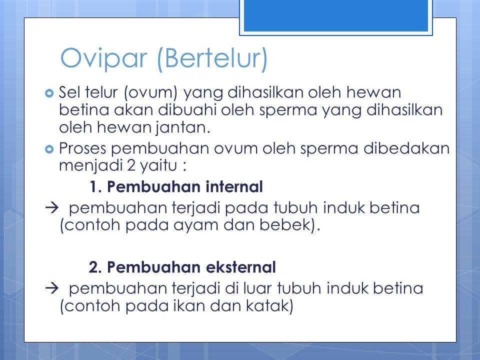 Sistem reproduksi hewan bertelur (ovipar)
