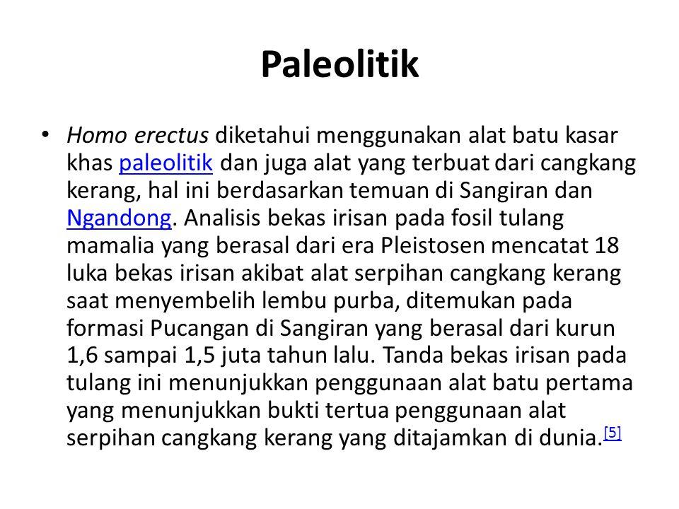 Paleolitik Homo erectus diketahui menggunakan alat batu kasar khas paleolitik dan juga alat yang terbuat dari cangkang kerang, hal ini berdasarkan tem