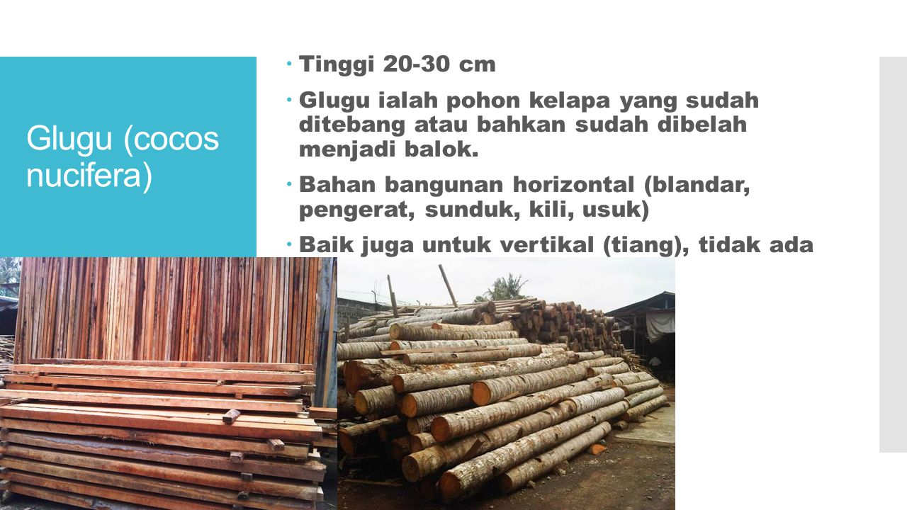 bambu  Bambu tali (gigantochloa apus) dengan gemangnya 5-8 cm dan tingginya mencapai 8-11 m, batangnya berwarna hijau sampai kuning-keputihan dan jarak ruasnya 65 cm.