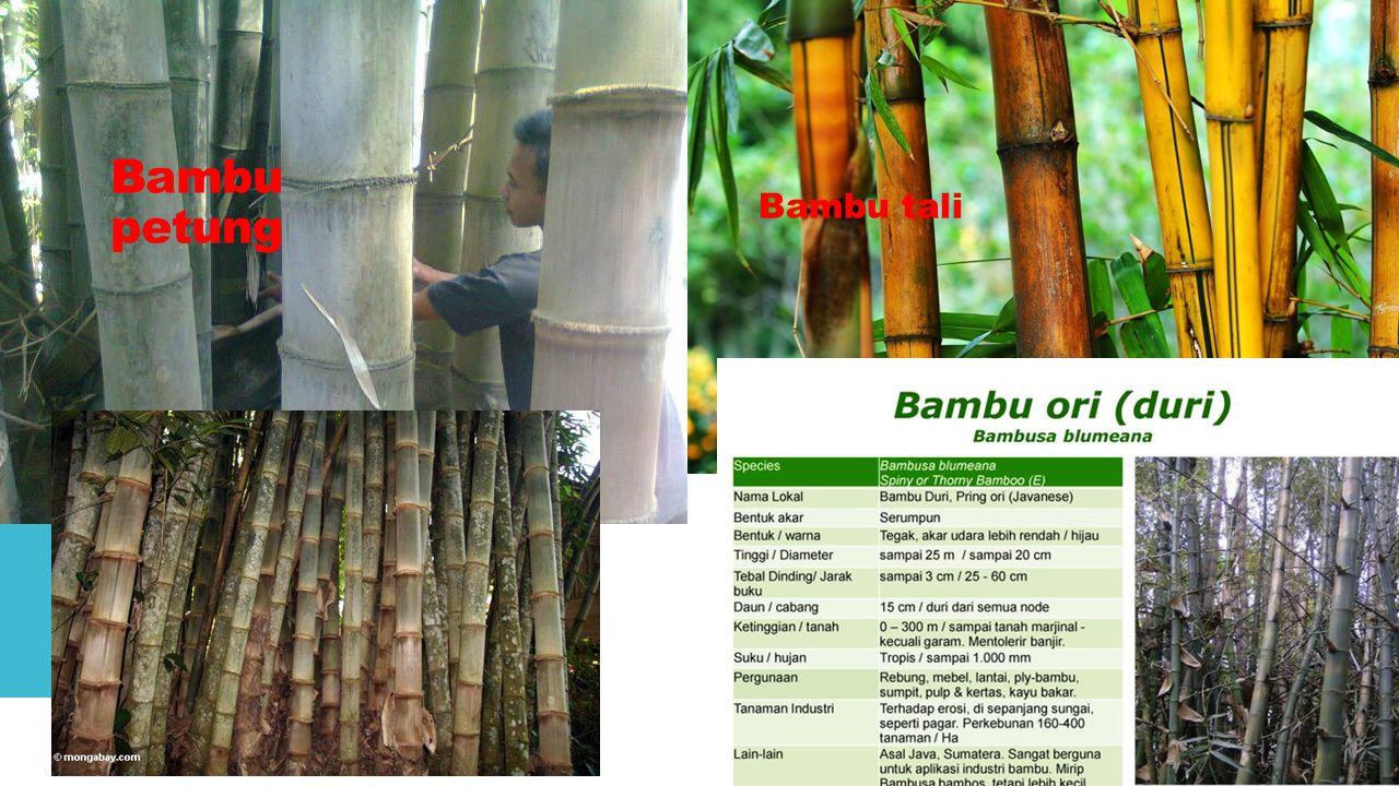 Kayu jati (tectona grandis)  Bahan bangunan kayu terbaik.