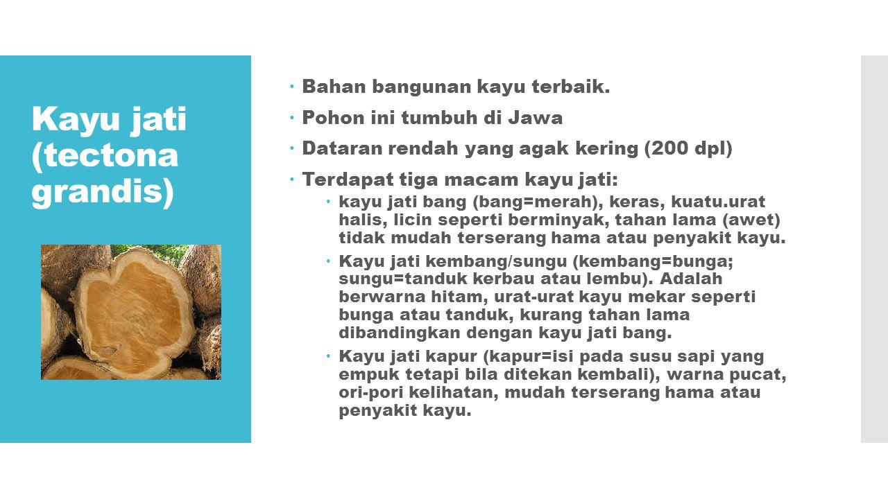  Kayu jati sering dianggap sebagai kayu dengan serat dan tekstur paling indah.