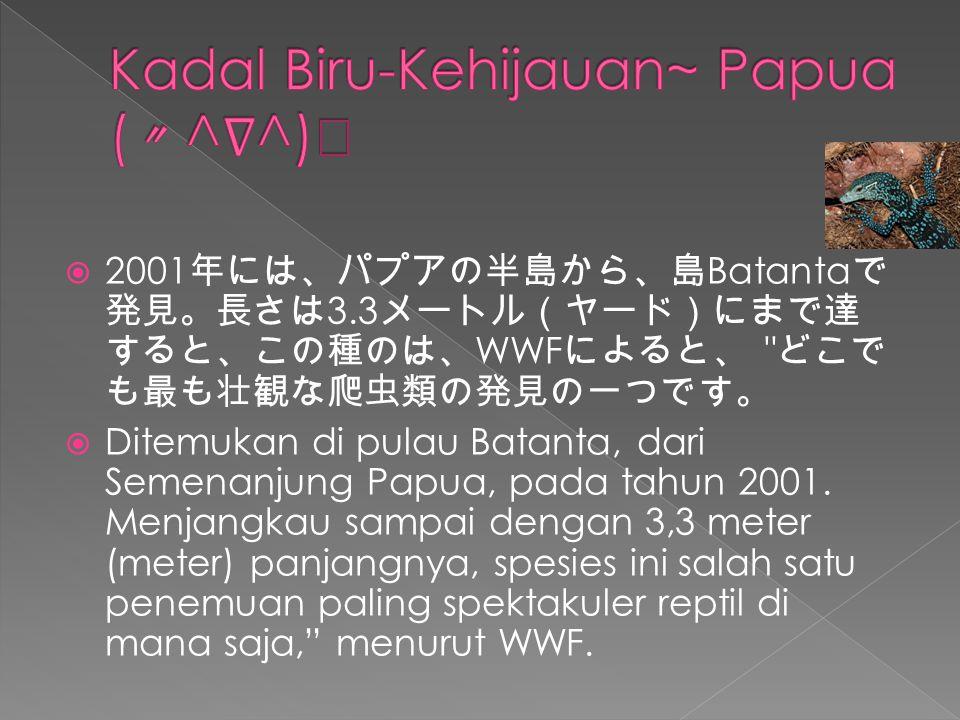  2001 年には、パプアの半島から、島 Batanta で 発見。長さは 3.3 メートル(ヤード)にまで達 すると、この種のは、 WWF によると、 どこで も最も壮観な爬虫類の発見の一つです。  Ditemukan di pulau Batanta, dari Semenanjung Papua, pada tahun 2001.