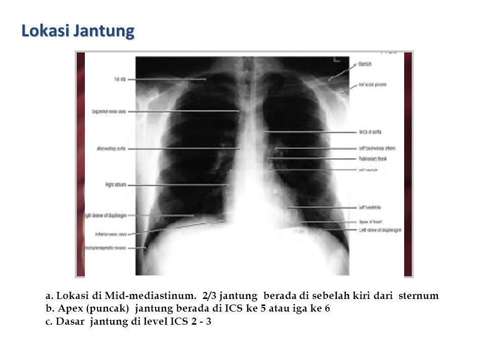Lokasi Jantung a. Lokasi di Mid-mediastinum. 2/3 jantung berada di sebelah kiri dari sternum b. Apex (puncak) jantung berada di ICS ke 5 atau iga ke 6