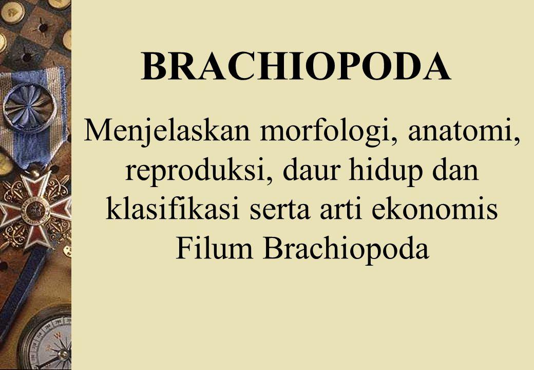 BRACHIOPODA Menjelaskan morfologi, anatomi, reproduksi, daur hidup dan klasifikasi serta arti ekonomis Filum Brachiopoda