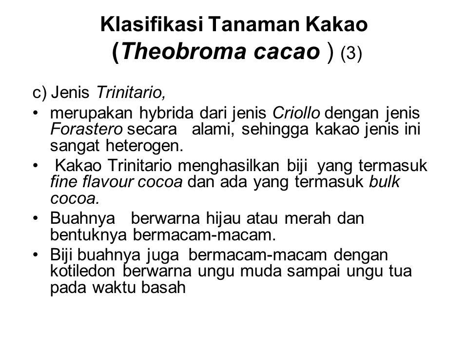 Klasifikasi Tanaman Kakao (Theobroma cacao ) (3) c) Jenis Trinitario, merupakan hybrida dari jenis Criollo dengan jenis Forastero secara alami, sehing