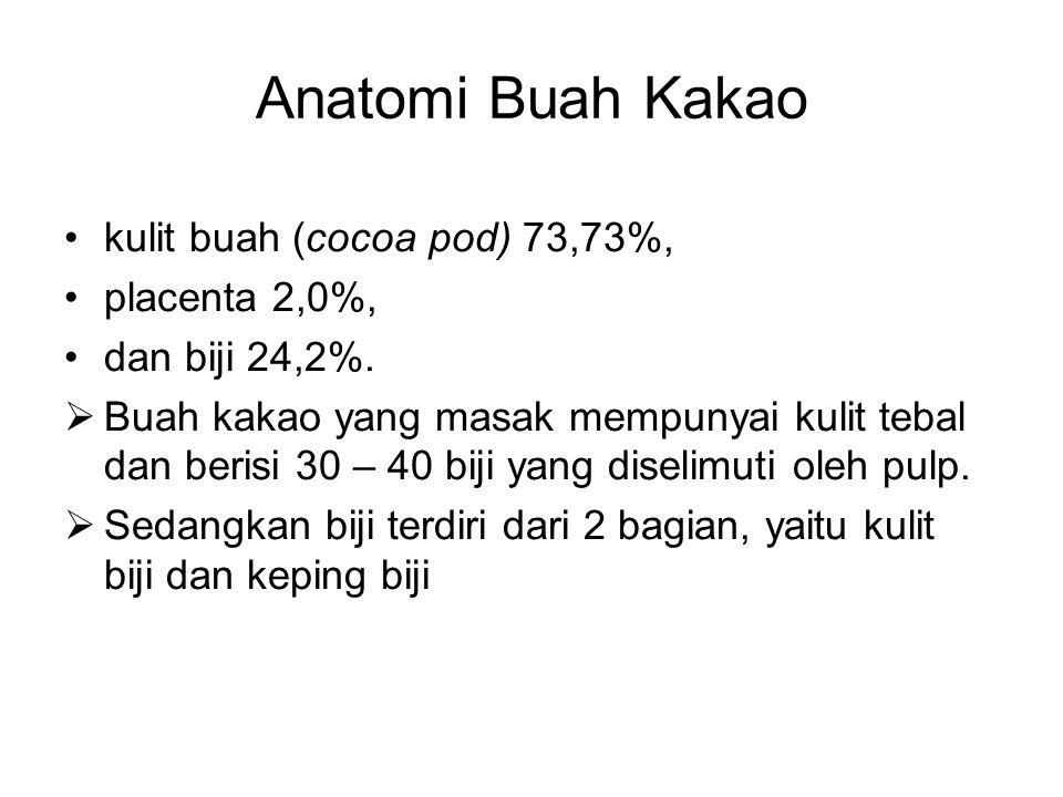 Anatomi Buah Kakao kulit buah (cocoa pod) 73,73%, placenta 2,0%, dan biji 24,2%.  Buah kakao yang masak mempunyai kulit tebal dan berisi 30 – 40 biji