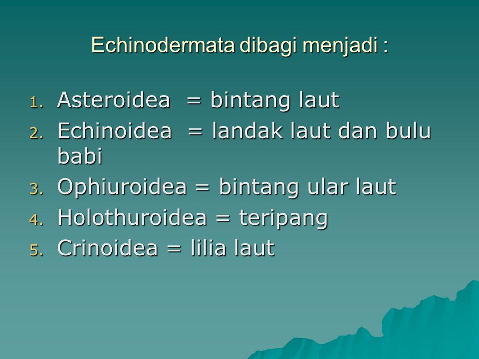 Echinodermata dibagi menjadi : 1. Asteroidea = bintang laut 2. Echinoidea = landak laut dan bulu babi 3. Ophiuroidea = bintang ular laut 4. Holothuroi