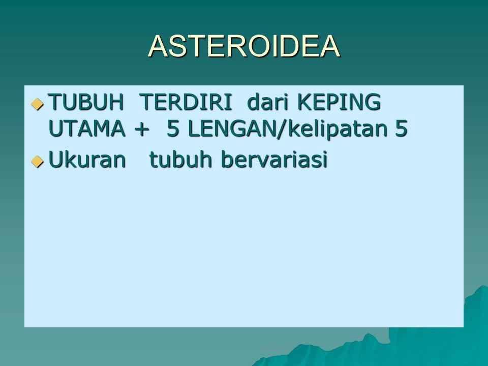 Contoh gambar Asteroidea Asteroidea = bintang laut.