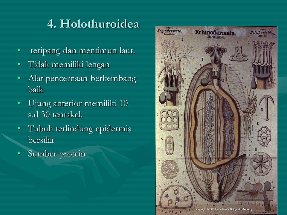 4. Holothuroidea teripang dan mentimun laut. teripang dan mentimun laut. Tidak memiliki lenganTidak memiliki lengan Alat pencernaan berkembang baikAla