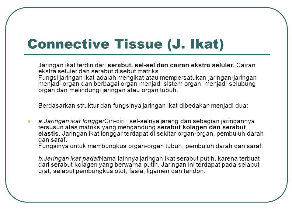 Connective Tissue (J.Ikat) Jaringan ikat terdiri dari serabut, sel-sel dan cairan ekstra seluler.