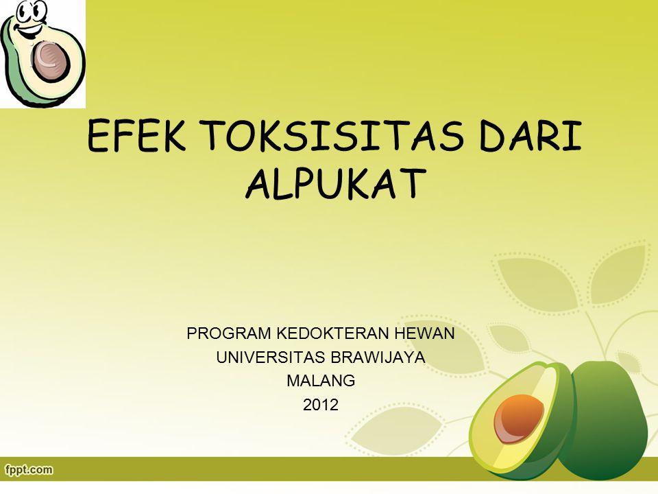 EFEK TOKSISITAS DARI ALPUKAT PROGRAM KEDOKTERAN HEWAN UNIVERSITAS BRAWIJAYA MALANG 2012