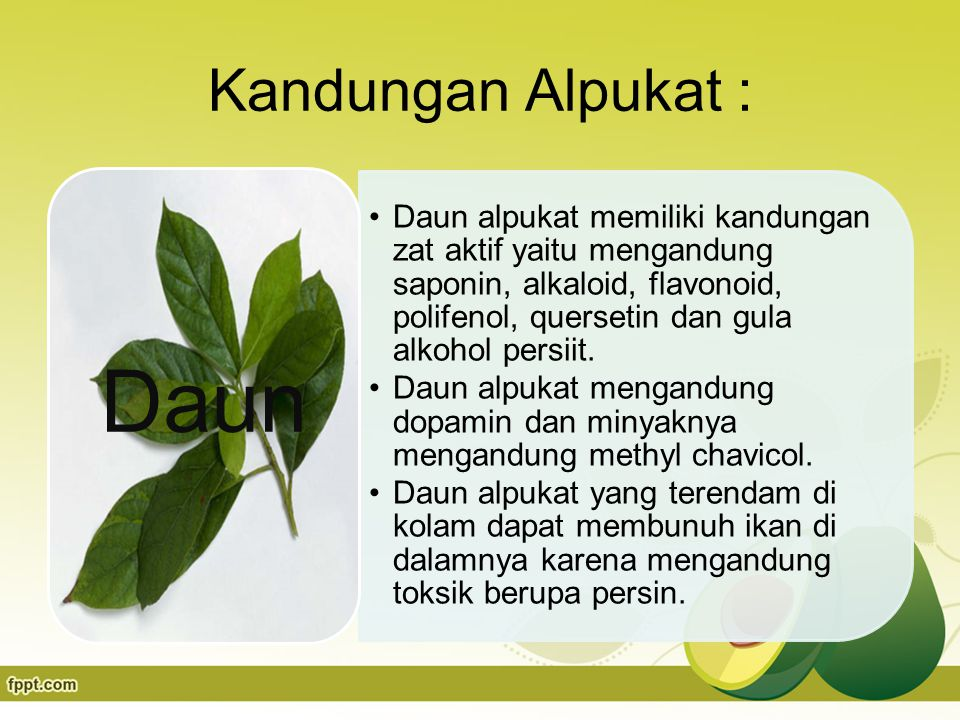Kandungan Alpukat : Daun alpukat memiliki kandungan zat aktif yaitu mengandung saponin, alkaloid, flavonoid, polifenol, quersetin dan gula alkohol persiit.