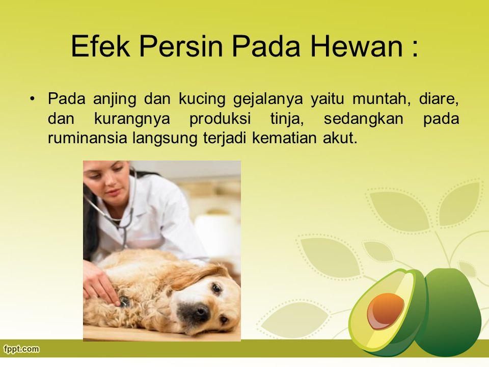 Efek Persin Pada Hewan : Pada anjing dan kucing gejalanya yaitu muntah, diare, dan kurangnya produksi tinja, sedangkan pada ruminansia langsung terjadi kematian akut.