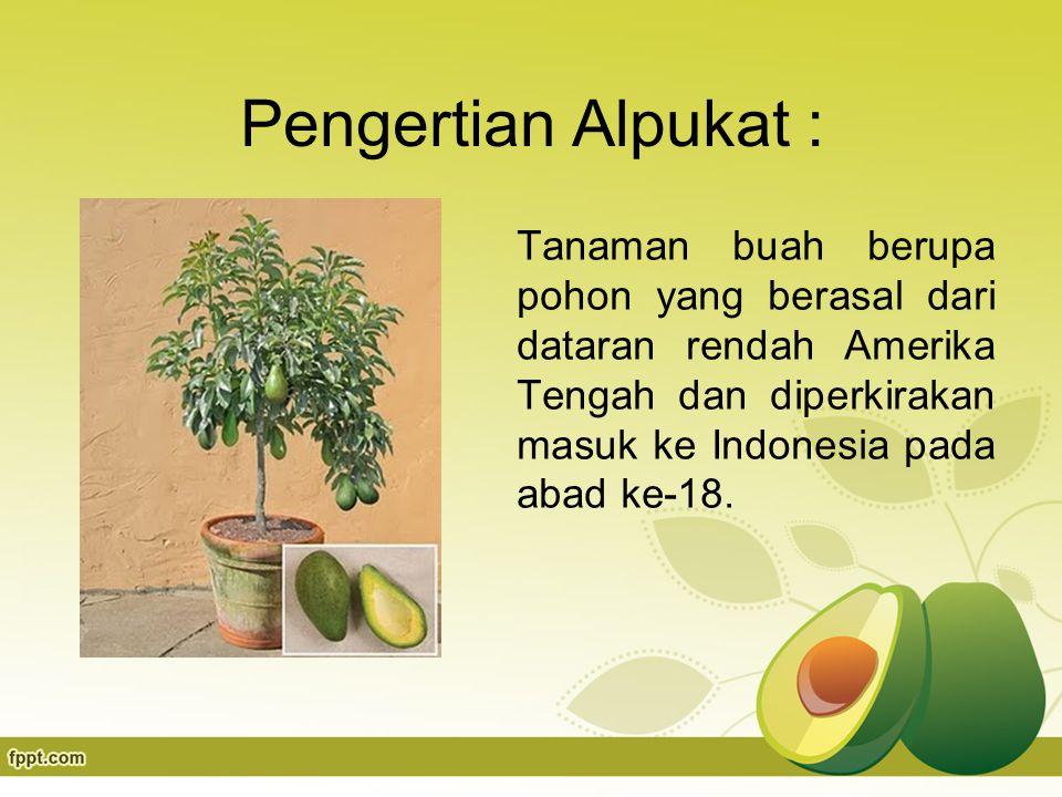 Pengertian Alpukat : Tanaman buah berupa pohon yang berasal dari dataran rendah Amerika Tengah dan diperkirakan masuk ke Indonesia pada abad ke-18.