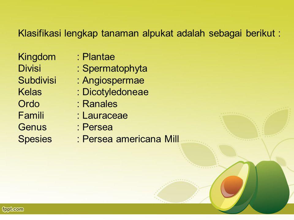 Klasifikasi lengkap tanaman alpukat adalah sebagai berikut : Kingdom : Plantae Divisi : Spermatophyta Subdivisi : Angiospermae Kelas: Dicotyledoneae Ordo : Ranales Famili: Lauraceae Genus: Persea Spesies : Persea americana Mill