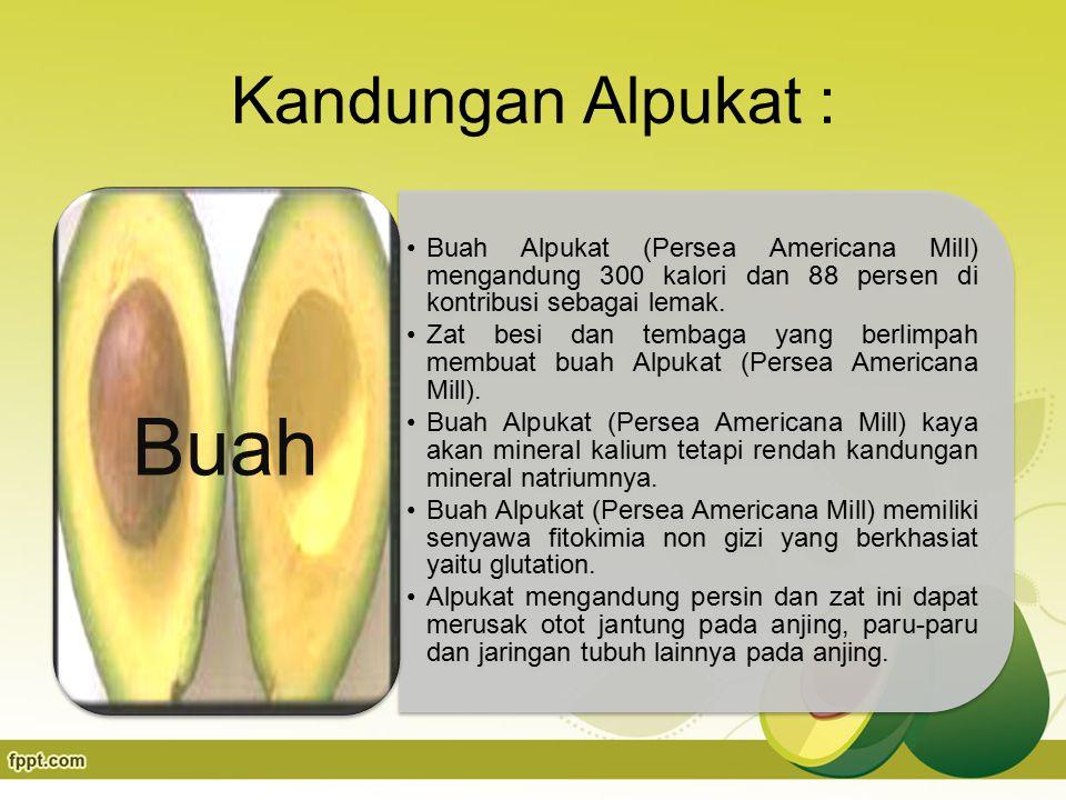 Kandungan Alpukat : Buah Alpukat (Persea Americana Mill) mengandung 300 kalori dan 88 persen di kontribusi sebagai lemak.