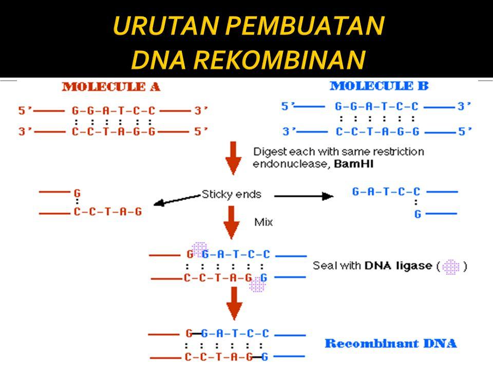  Bioteknologi modern (khususnya rekayasa genetika) : mengubah sifat organisme sehingga memiliki kemampuan seperti yang diinginkan.