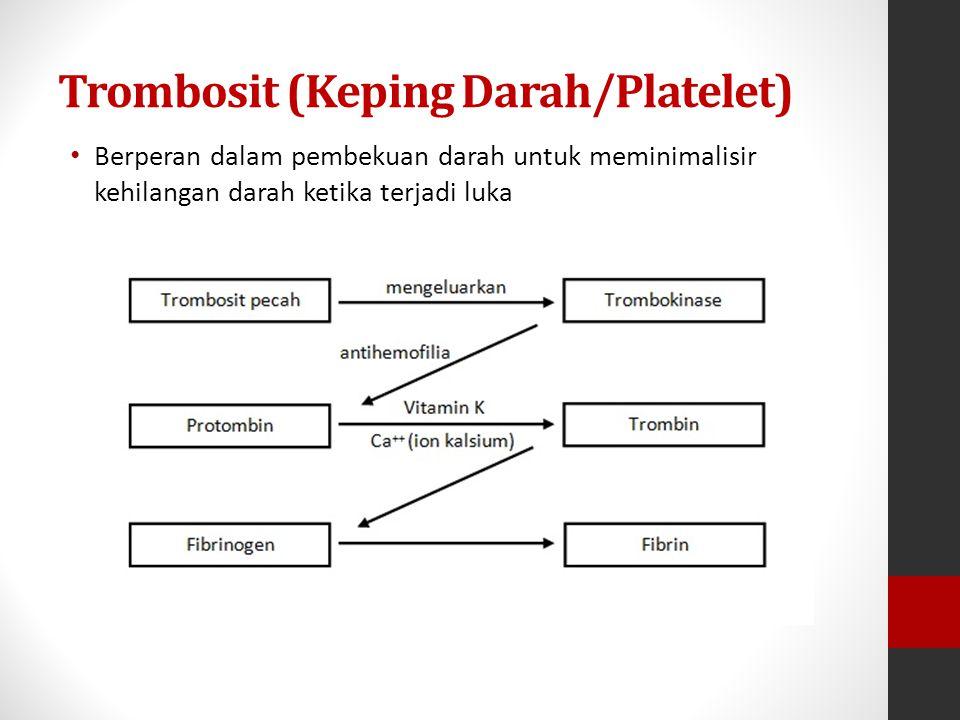 Trombosit (Keping Darah/Platelet) Berperan dalam pembekuan darah untuk meminimalisir kehilangan darah ketika terjadi luka