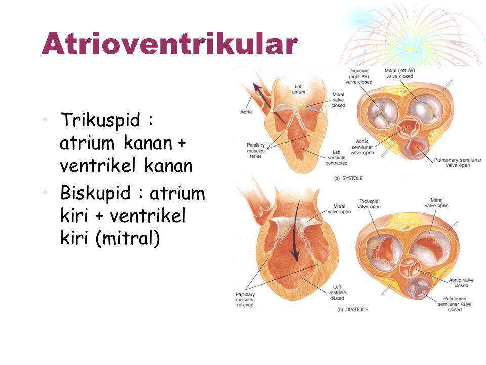 Katup-katup Jantung Dua jenis katup : 1. Atrio ventrikular 2. Semilunaris Atrio ventrikular : memisahkan atrium & ventrikel Semilunar : memisahkan art