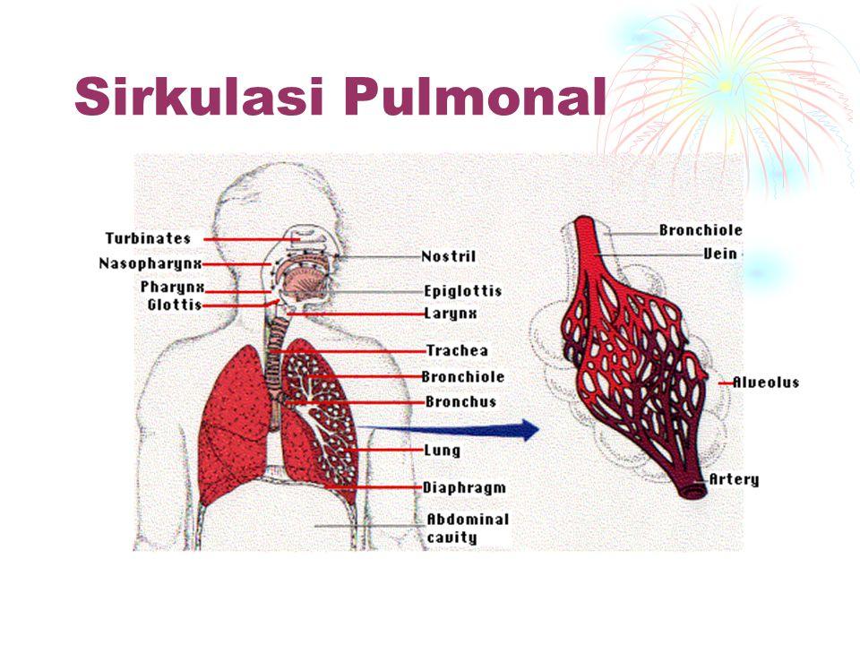 Sirkulasi Pulmonal Kontraksi v. kanan jantung memompa darah ke a.pulmonalis ke paru-paru. Difusi (O 2 + CO 2 ) ke darah di kembalikan ke atrium kiri.