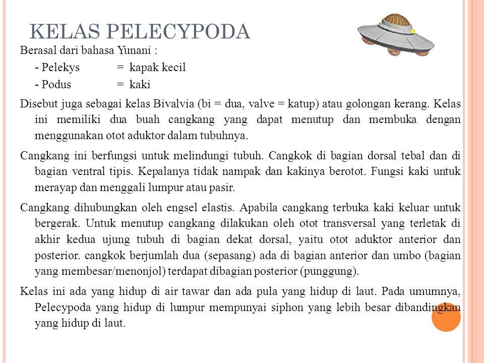 KELAS PELECYPODA Berasal dari bahasa Yunani : - Pelekys= kapak kecil - Podus= kaki Disebut juga sebagai kelas Bivalvia (bi = dua, valve = katup) atau golongan kerang.
