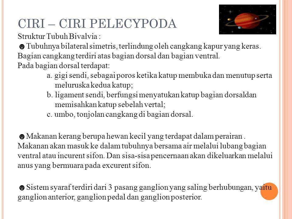 CIRI – CIRI PELECYPODA Struktur Tubuh Bivalvia : ☻Tubuhnya bilateral simetris, terlindung oleh cangkang kapur yang keras.