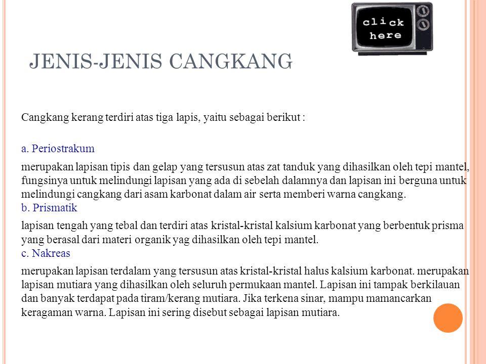 JENIS-JENIS CANGKANG Cangkang kerang terdiri atas tiga lapis, yaitu sebagai berikut : a.