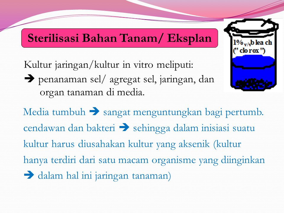Sterilisasi Bahan Tanam/ Eksplan Kultur jaringan/kultur in vitro meliputi:  penanaman sel/ agregat sel, jaringan, dan organ tanaman di media.