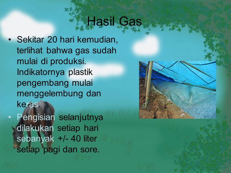 Hasil Gas Sekitar 20 hari kemudian, terlihat bahwa gas sudah mulai di produksi. Indikatornya plastik pengembang mulai menggelembung dan keras. Pengisi