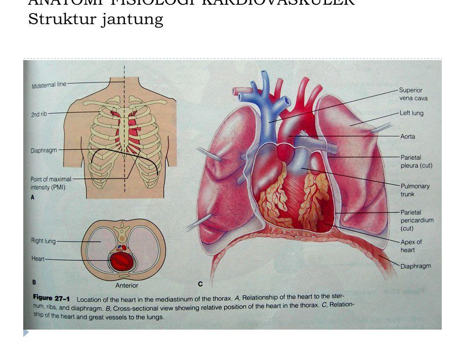 Arteri koronaria kanan : memperdarahi atrium kanan, ventrikel kanan, SA node dan AV-node.