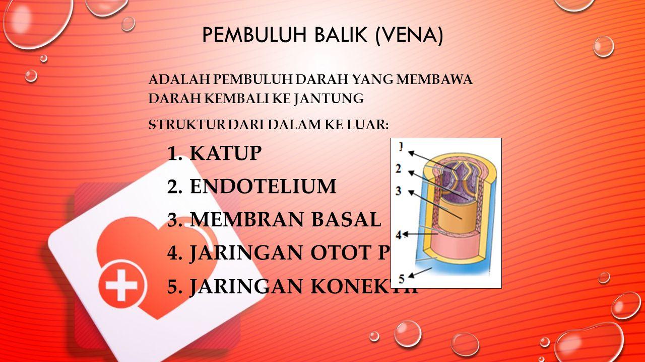 PEMBULUH BALIK (VENA) ADALAH PEMBULUH DARAH YANG MEMBAWA DARAH KEMBALI KE JANTUNG STRUKTUR DARI DALAM KE LUAR: 1.KATUP 2.ENDOTELIUM 3.MEMBRAN BASAL 4.