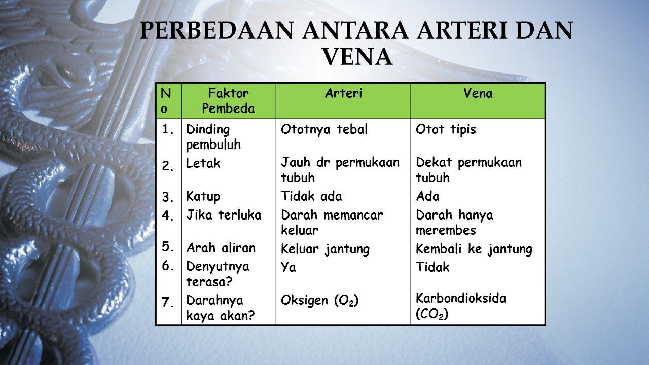 PERBEDAAN ANTARA ARTERI DAN VENA NoNo Faktor Pembeda ArteriVena 1. 2. 3. 4. 5. 6. 7. Dinding pembuluh Letak Katup Jika terluka Arah aliran Denyutnya t