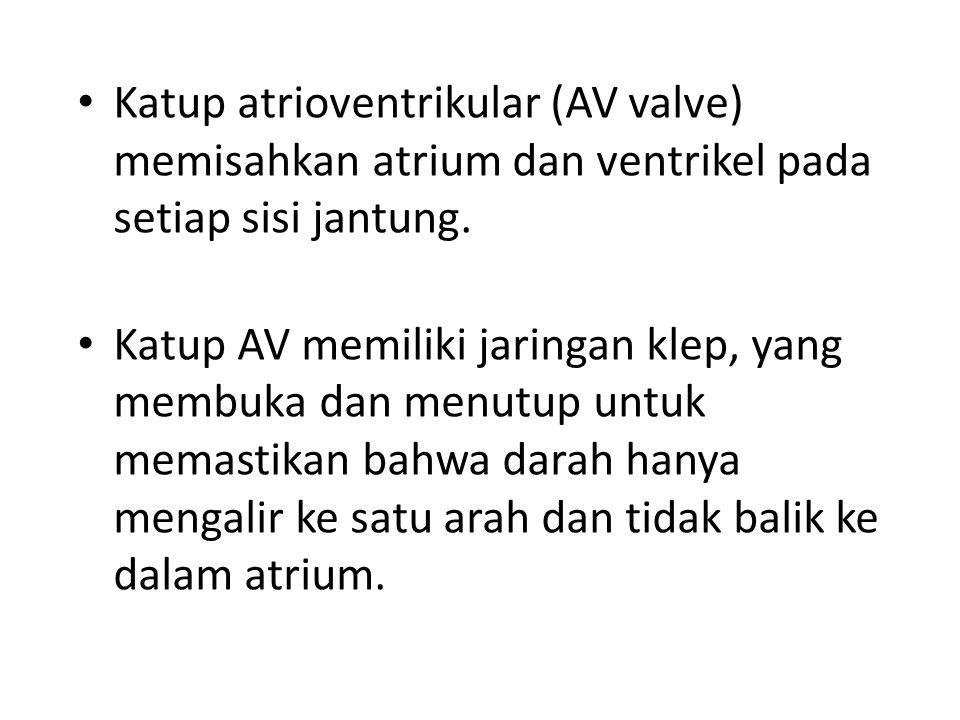 Katup atrioventrikular (AV valve) memisahkan atrium dan ventrikel pada setiap sisi jantung. Katup AV memiliki jaringan klep, yang membuka dan menutup
