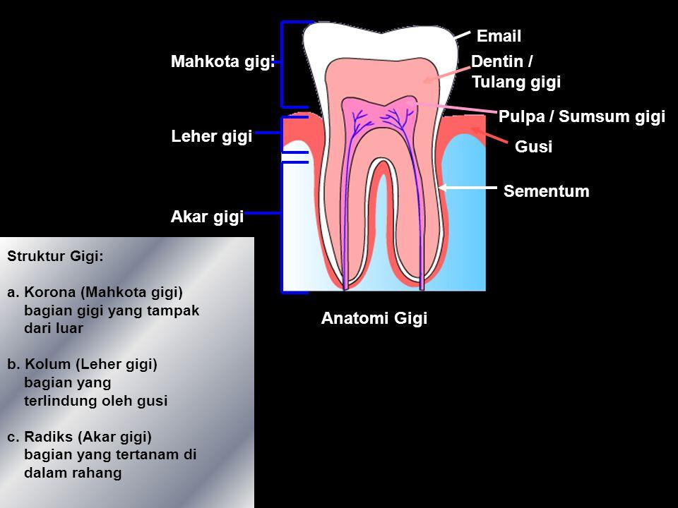 1. Gigi (Secara Mekanik) Insisivus Caninus Prae Molar Molar Prae Molar 4 Macam gigi manusia a. Insisivus (Gigi Seri) - Untuk memotong dan menggigit b.