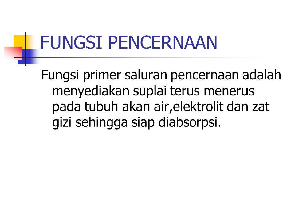 LAMBUNG Lambung adalah kelanjutan dari esophagus, berbentuk seperti kantung.