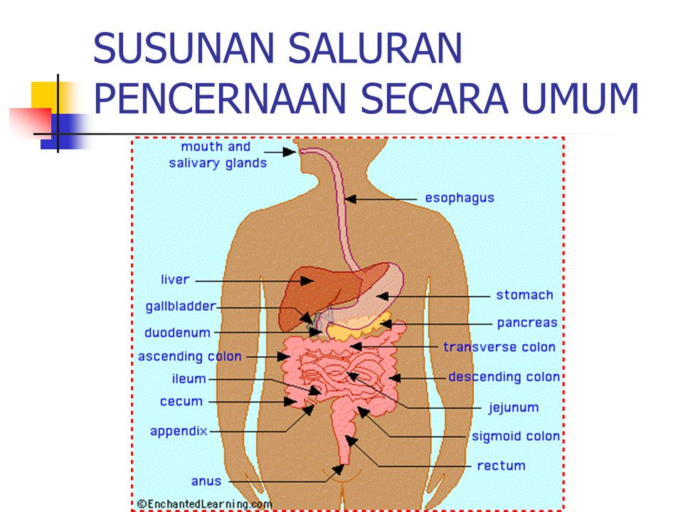 3.Kolik Adalah rasa sakit pada saluran pencernaan akibat penyumbatan saluran pencernaan.