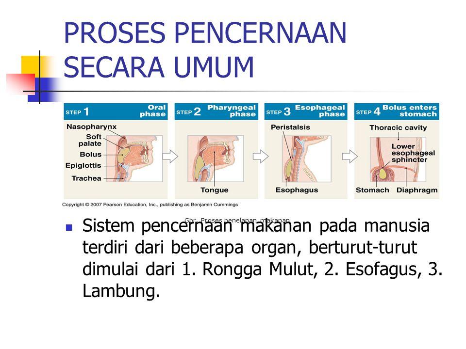 PROSES PENCERNAAN SECARA UMUM Sistem pencernaan makanan pada manusia terdiri dari beberapa organ, berturut-turut dimulai dari 1.