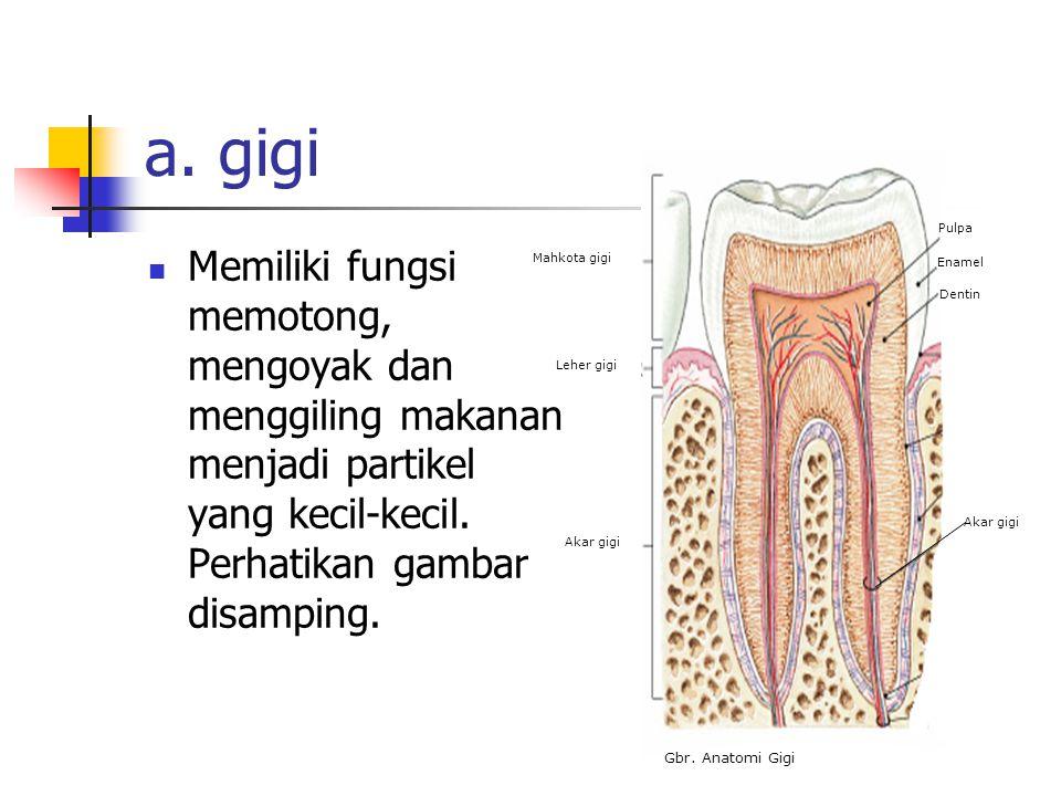 MULUT Mulut merupakan saluran pertama yang dilalui makanan. Pada rongga mulut, dilengkapi alat pencernaan dan kelenjar pencernaan untuk membantu pence