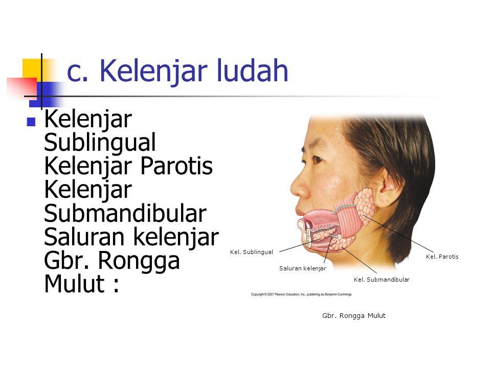 b. Lidah Memiliki peran mengatur letak makanan di dalam mulut serta mengecap rasa makanan.