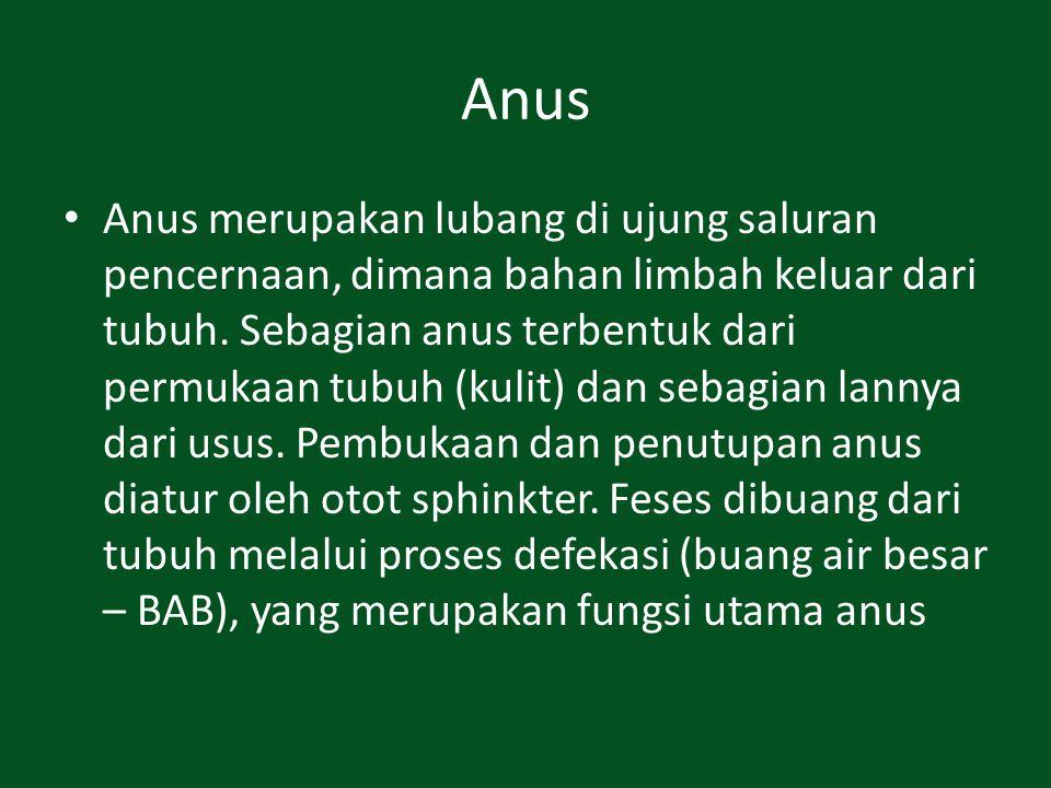 Anus Anus merupakan lubang di ujung saluran pencernaan, dimana bahan limbah keluar dari tubuh. Sebagian anus terbentuk dari permukaan tubuh (kulit) da